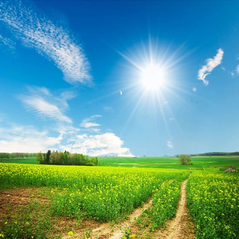 El otro camino. Felicidad
